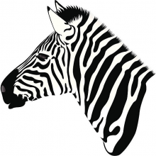 zebra.png (612×612 px, 210 KB)