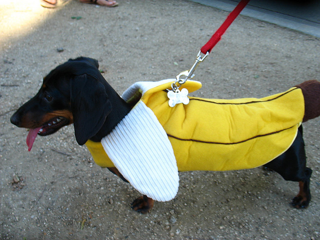bananadog