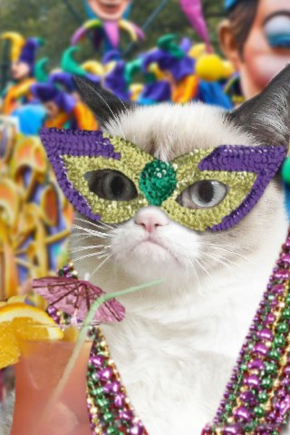 partycat